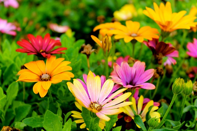 Flower Care 3-4-3