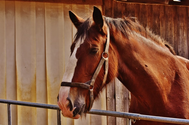 Horse Ration