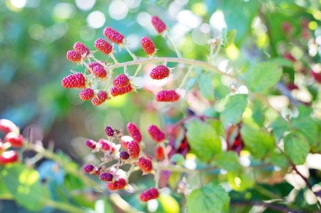 Berry Care Program
