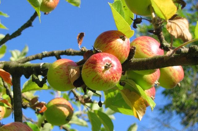 Fruit & Nut Tree Program