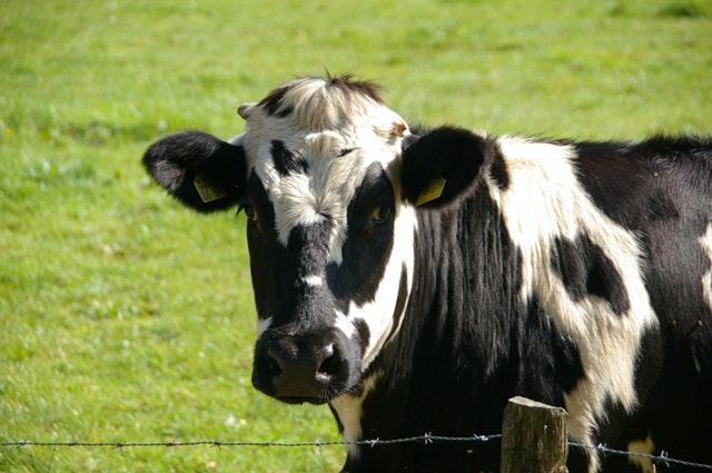Dairy Nutribalancers