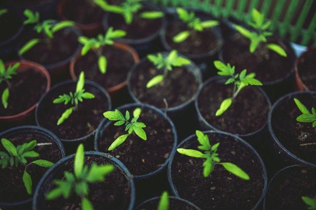 Premium Potting Soil