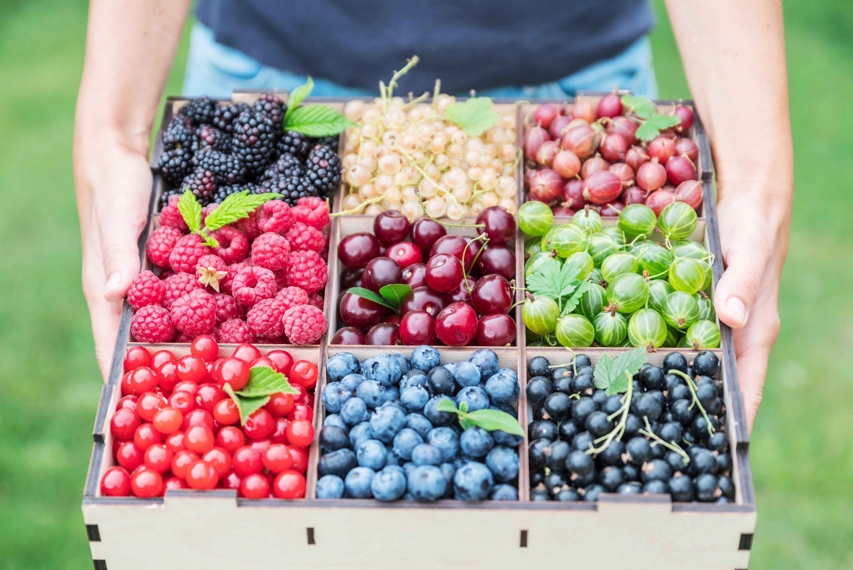 tray of fruit