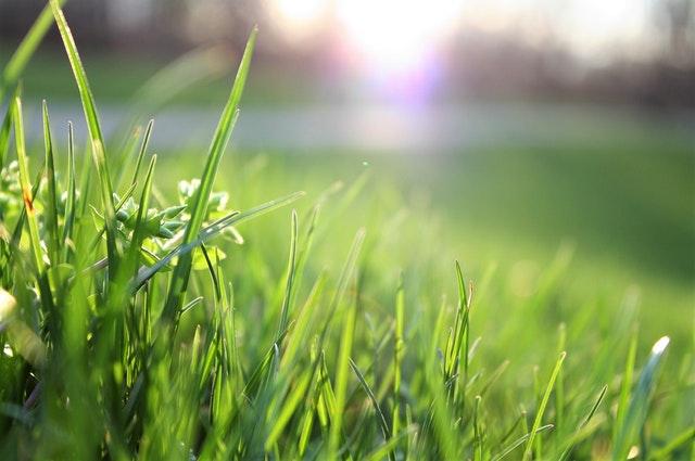 Lawn Care Program