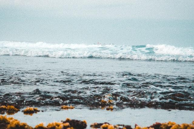 Fertrell North Atlantic Kelp Meal